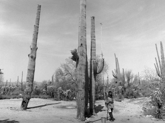 This image shows Juanita Ahill collecting saguaro fruit at Saguaro National Monument West near Tucson, Arizona. Photo by Helga Teiwes, 1970.